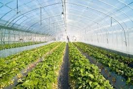 وسعت گلخانه های همدان به ۹۷۰ هزار مترمربع رسید