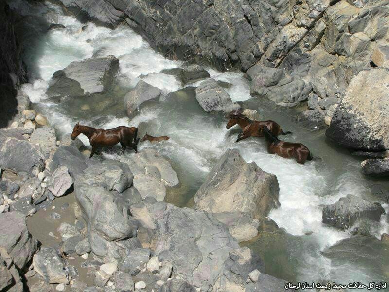 نقوش اسب وحشی در سنگوارههای لرستان