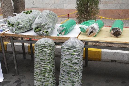 کشف محموله خیارهایی با طعم تریاک در یزد