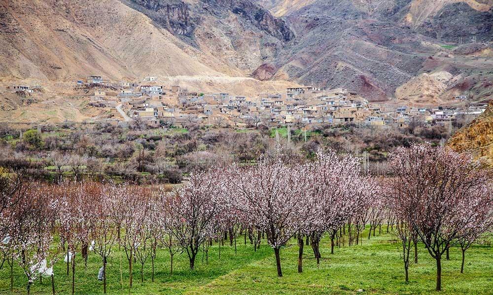 تصاویر | شکوفه زود هنگام درختان در یکی از سردترین نفاط کشور