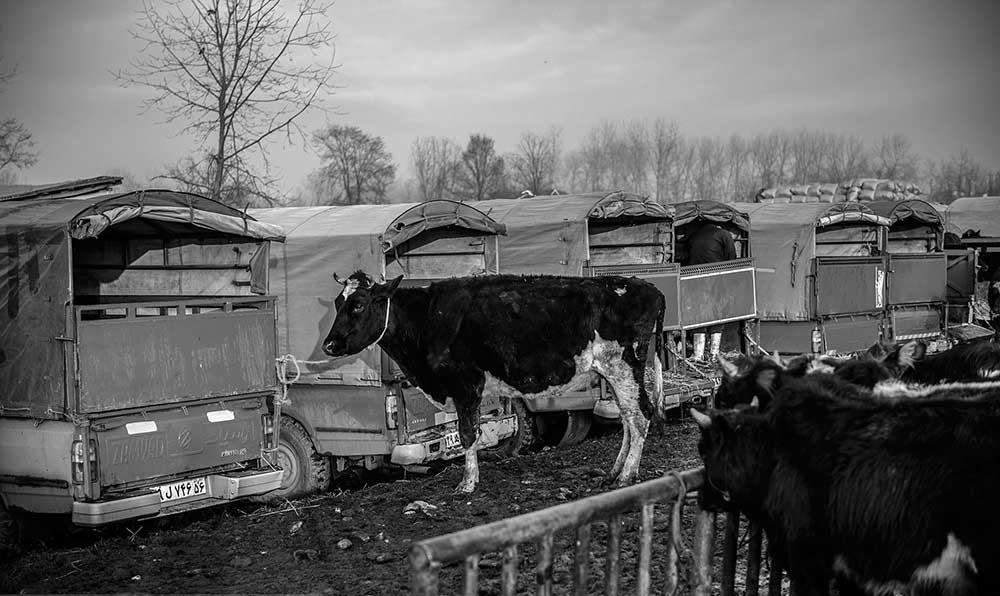 تصاویر | بازار دام کوچصفهان در گیلان