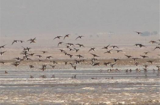 ۱۵۰۰ مسافر نوروزی از حیات وحش و تالاب کجی نهبندان بازدید کردند