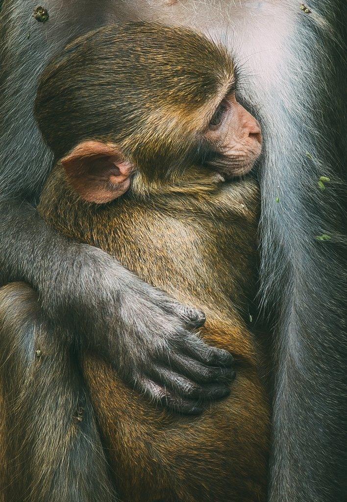تصاویر | برترینهای مسابقه عکاسی جهانی روز حیات وحش