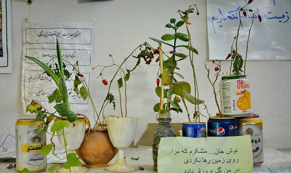 تصاویر | با پدر بلوط ایران آشنا شوید