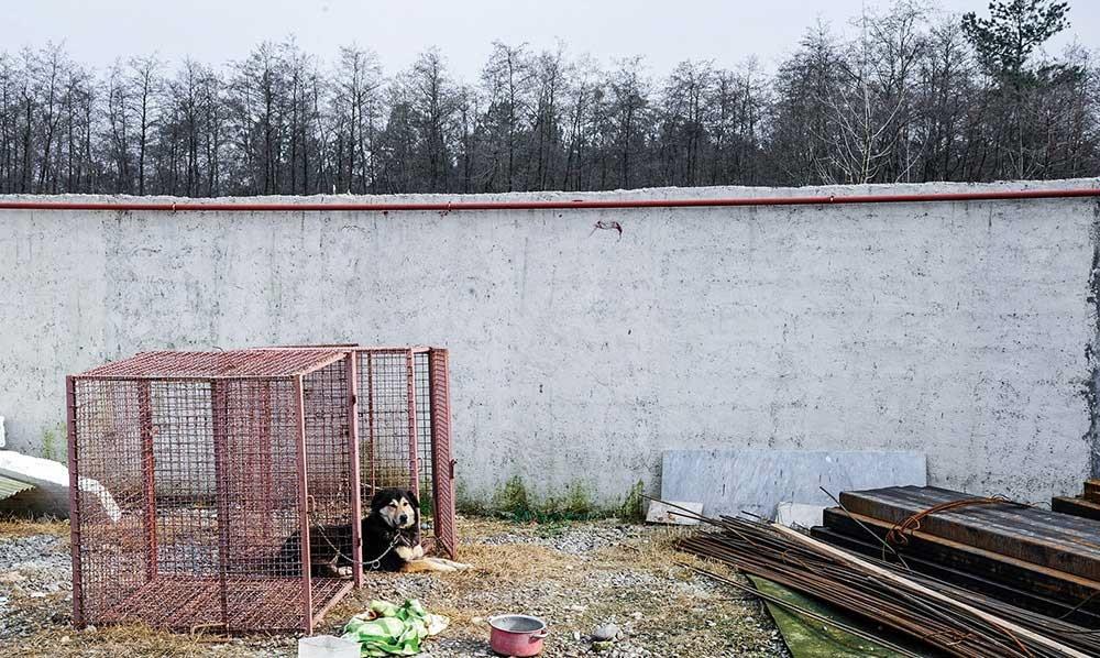 تصاویر | پناهگاهی برای حیوانات قطع نخاع شده ایران