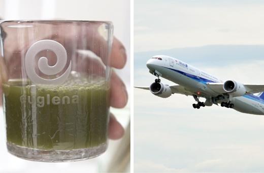 """غذا، کرم صورت و حالا سوخت هواپیما؛ همه بهرهبرداریهای ژاپنیها از """"جلبک"""""""
