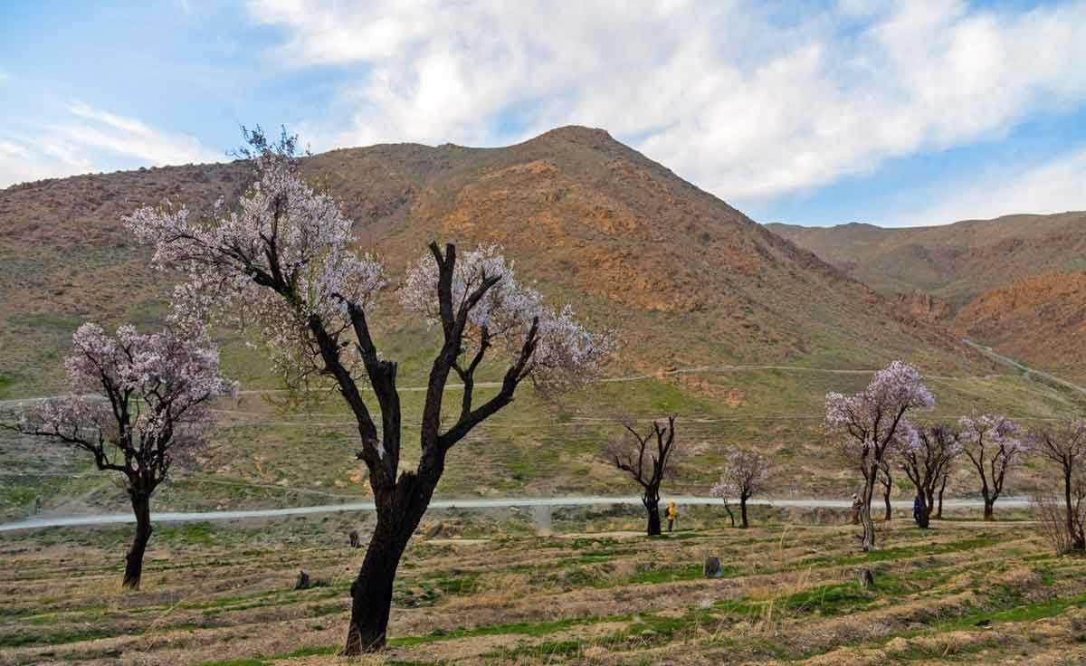 تصاویر   طبیعت بهاری روستایی به نام گردو