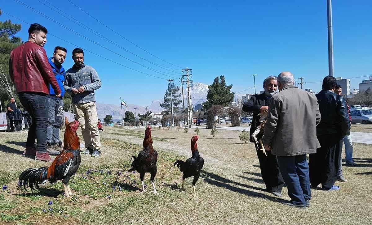 تصاویر   رونق بازار حیوانات خانگی در کرمانشاه