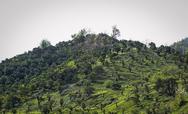 تصاویر |  طبیعت بهاری چابکسر