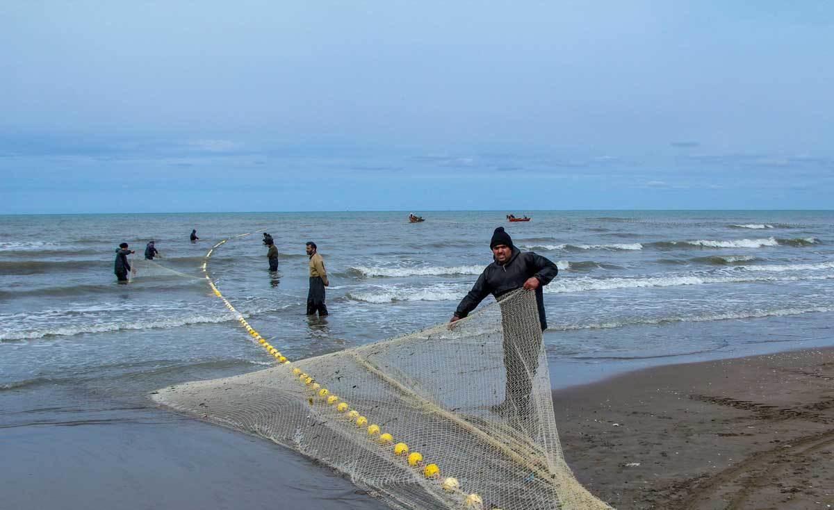 تصاویر | پایان صید ماهی استخوانی در سواحل خزر