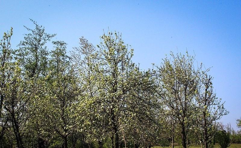 تصاویر | زیبایی غافلگیرکننده رودسر در بهار