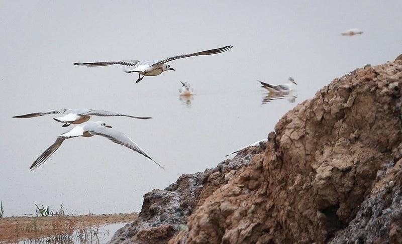 تصاویر | کوچ پرندگان به تالاب مره قم