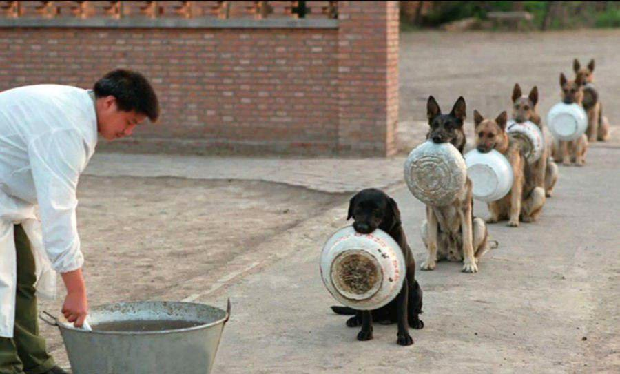 عکسی جالب از سگهای پلیس چین در صف غذا