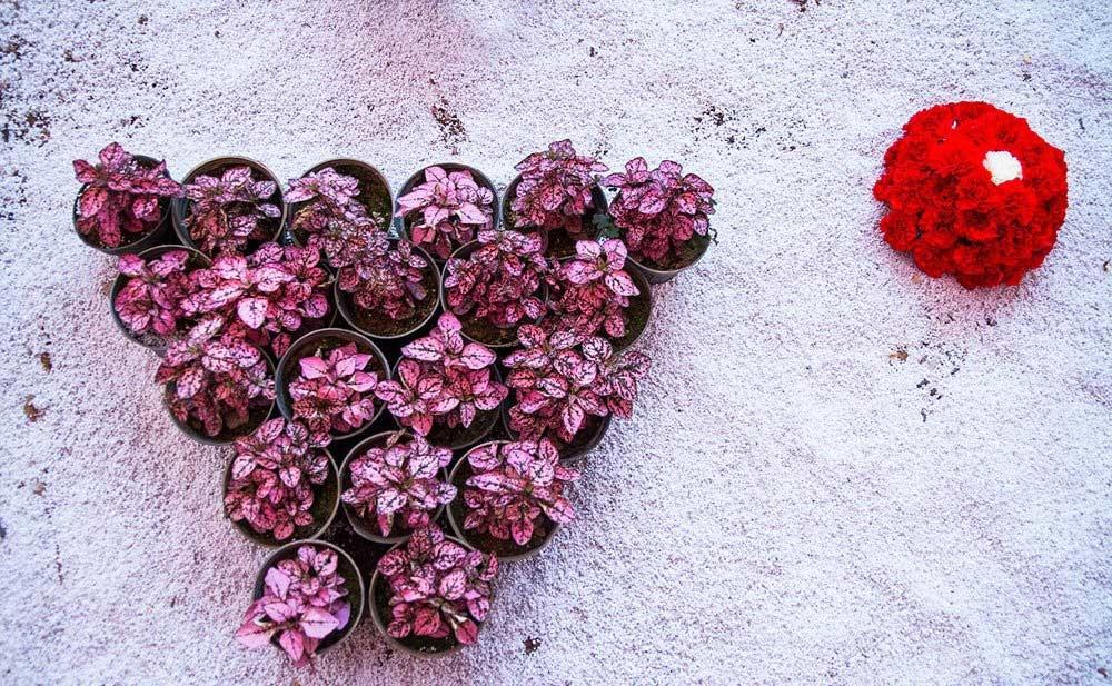 تصاویر | آغاز به کار پانزدهمین جشنواره گل و گیاه محلات