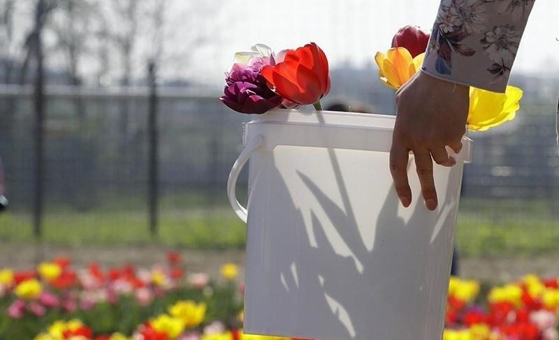 تصاویر | فصل بهار در نقاط مختلف جهان