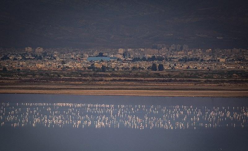 تصاویر | صحنههایی زیبا از مهاجرت فلامینگوها به فارس