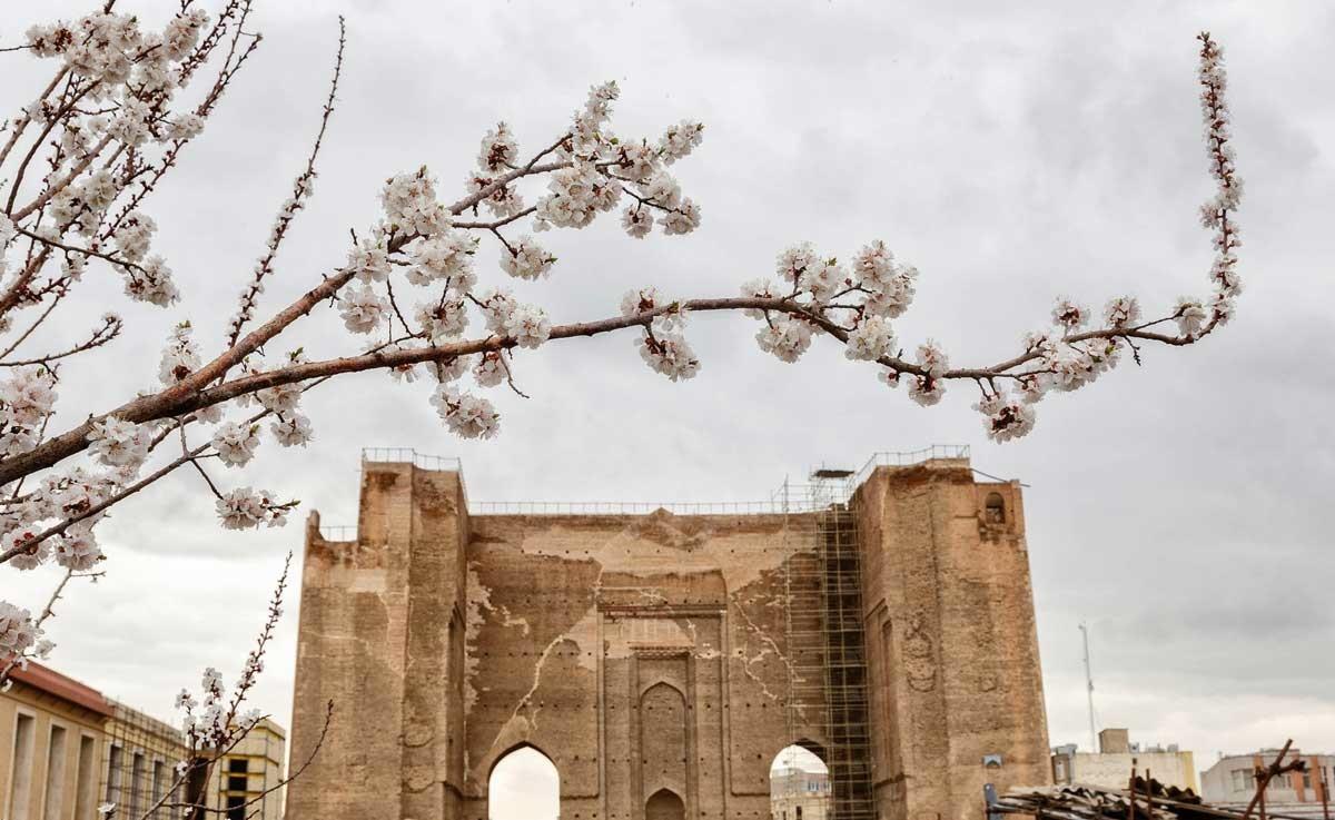 تصاویر | طراوت بهار در نمنم باران تبریز