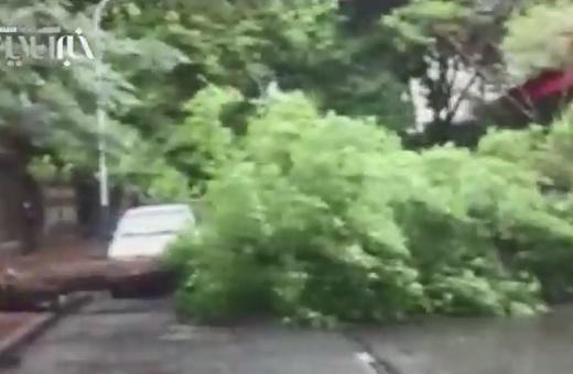 فیلم   سقوط درخت کهنسال بر اثر بارندگیهای امروز