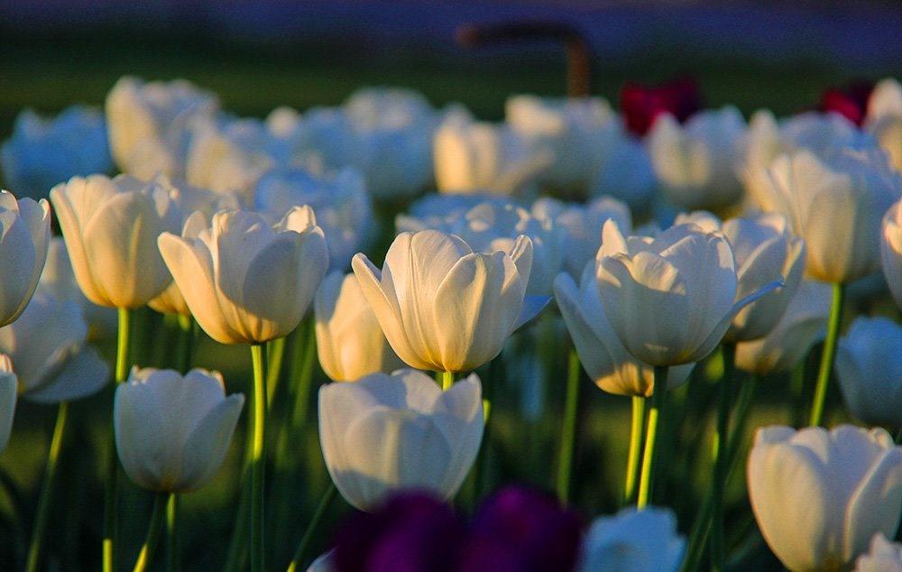 تصاویر | بهار در باغ گیاهشناسی تهران