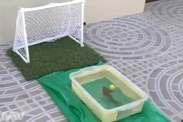 فیلم | پنالتی زدن یک ماهی فوتبالیست!