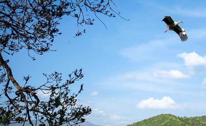 روستاهای اطراف دریاچه زریبار شهر مریوان میزبان لکلکهای مهاجر