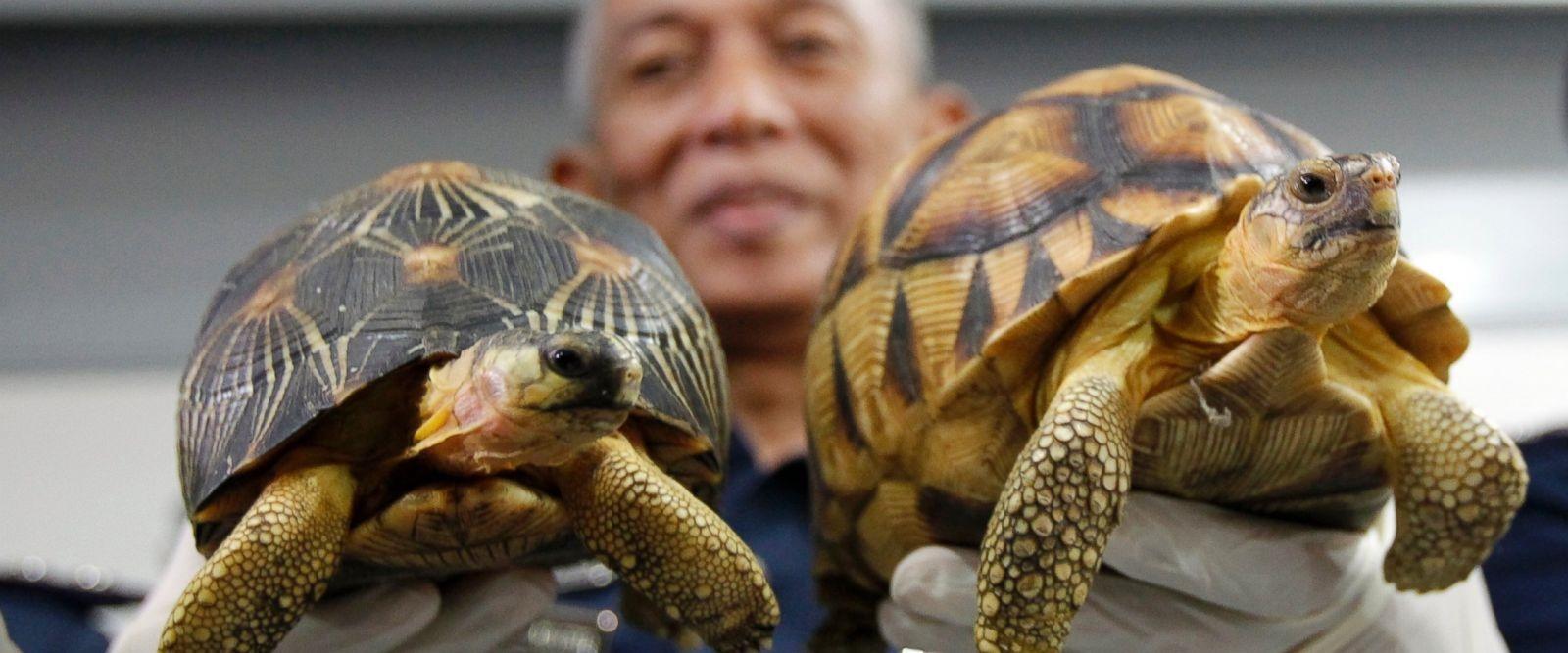 تصاویر | کشف قاچاق صدها لاکپشت در معرض انقراض در مالزی