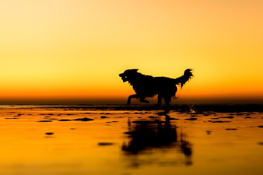 تصاویر برنده در مسابقه سالانه عکاسی از سگها
