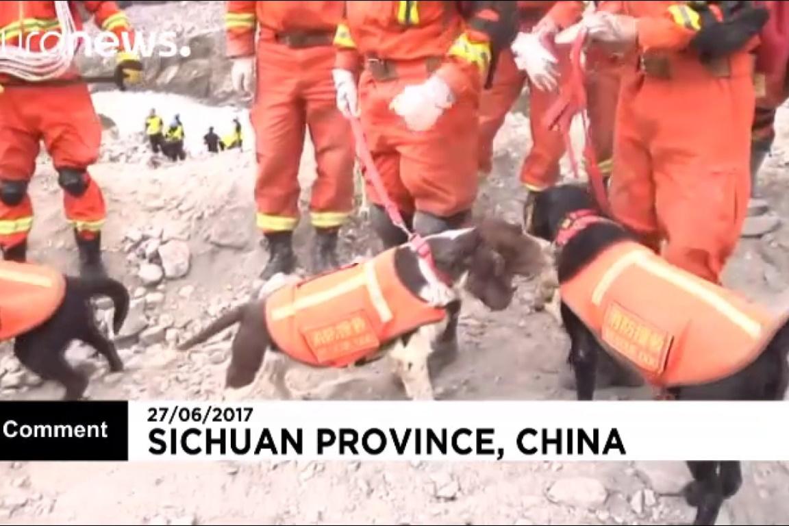 فیلم | سگهای ردیاب در جستوجوی مفقودشدگان زلزله چین