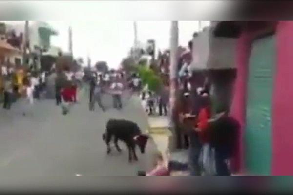 فیلم | له شدن وحشتناک یک مرد زیر شاخهای گاو