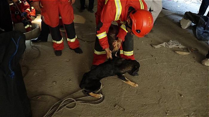 تصاویر | نجات یک سگ از عمق ۱۶متری چاه در تهران
