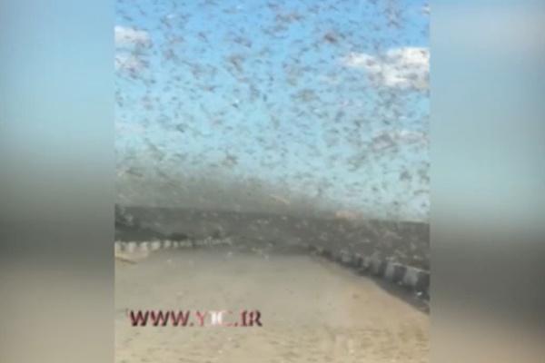 فیلم | حمله وحشتناک ملخها به قزاقستان