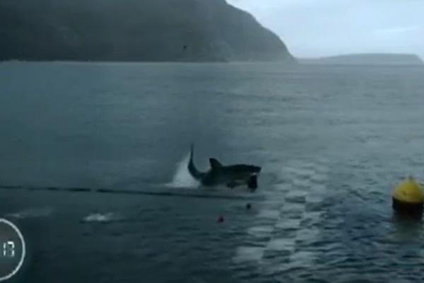 فیلم   مسابقه تماشایی قهرمان شنای جهان با یک کوسه سفید