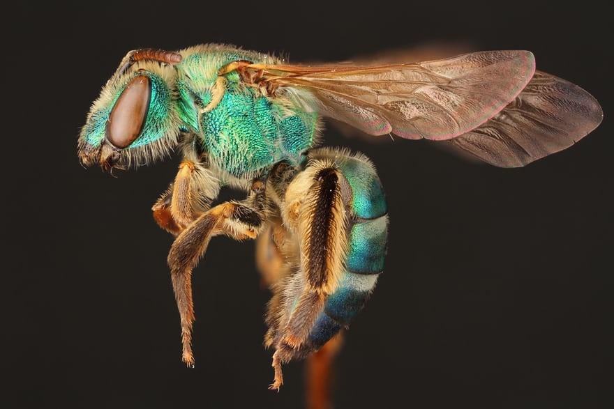 تصاویر دیدنی از دنیای حیرتانگیز زنبورها