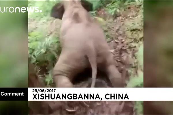 فیلم   سرسرهبازی بچه فیل چینی روی تپهها