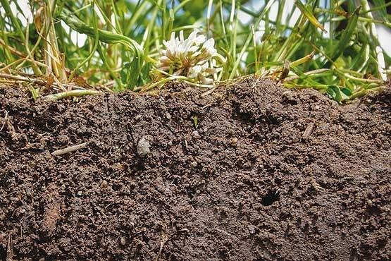 چرا خاک کشور شور شده است؟/ پاسخ استادیار دانشگاه کنکوردیا