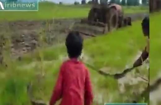 فیلم | سرگرمی عجیب کودکان کامبوجی در مزارع برنج