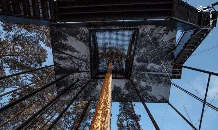 تصاویر | هتل درختی در جنگلهای کاج نروژ!