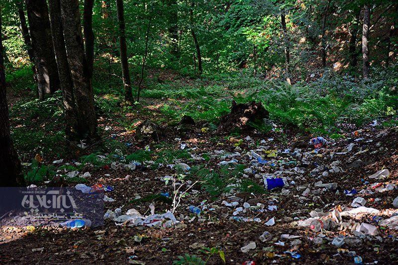 بگومگوی کاربران خبرآنلاین درباره ریختن زباله در بکرترین جنگلهای ایران/ مشکل فرهنگیست؟