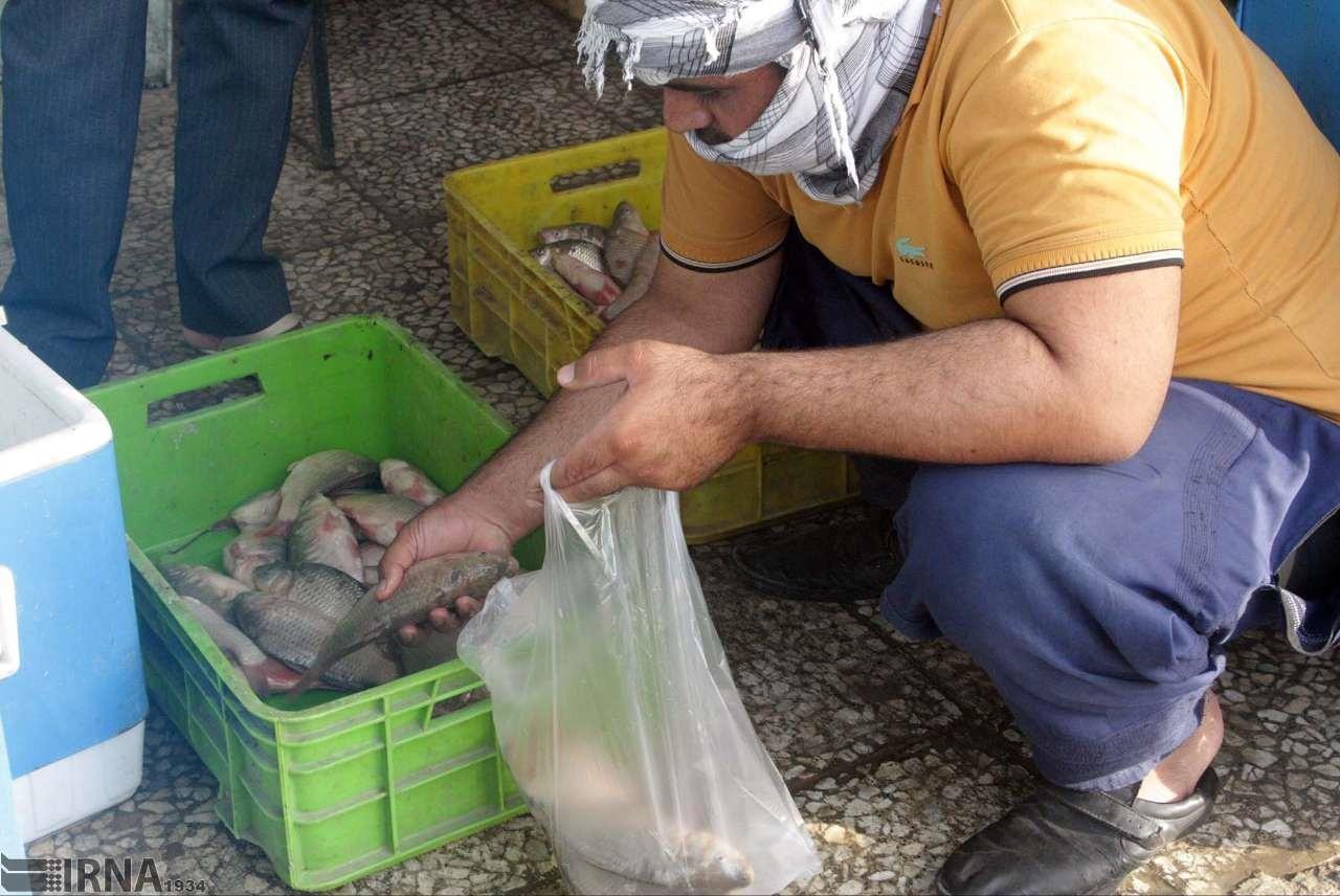 تصاویر   صید، تنها راه نجات ماهیها از خشکی هامون