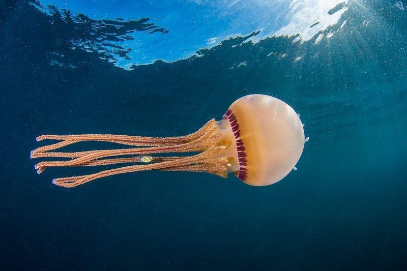 عکس | پناه گرفتن ماهی زیر چتر عروس دریایی در  عکس روز نشنال جئوگرافیک