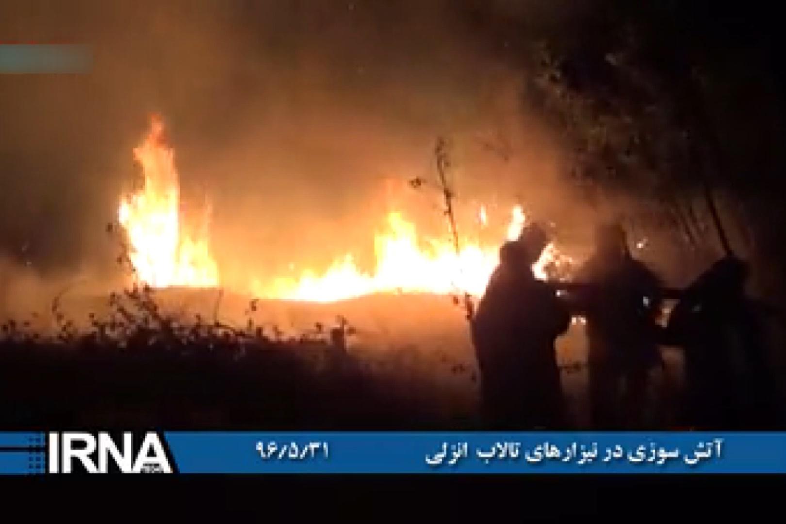 فیلم   آتشسوزی عمدی در نیزار های تالاب انزلی