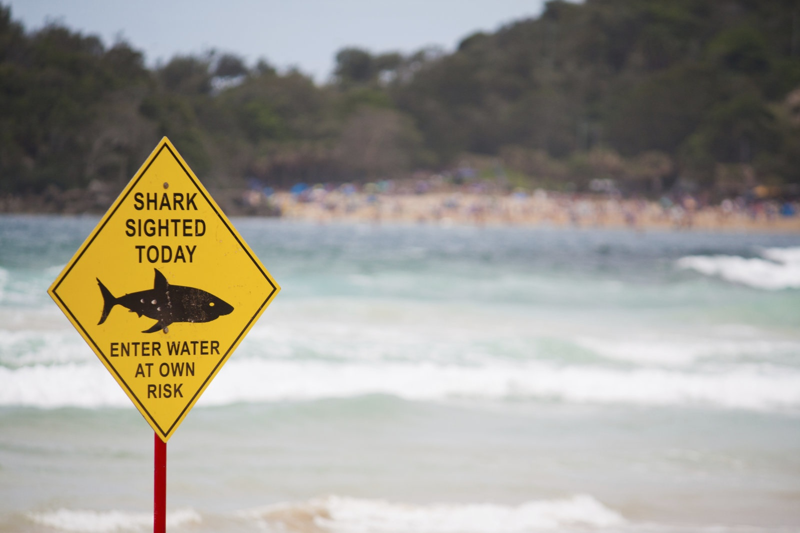 پهپادهای هوش مصنوعیدار علیه کوسههای استرالیا
