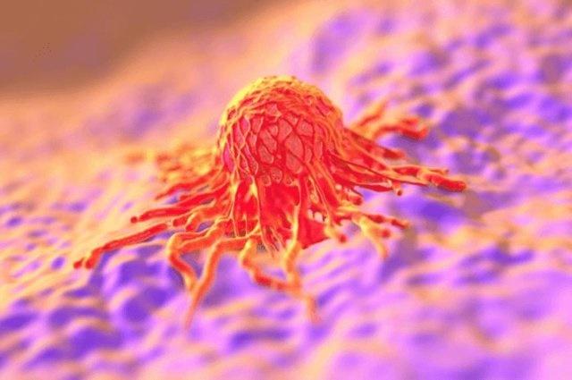 شبیهسازی اثر شیمیدرمانی روی تومورهای سرطانی
