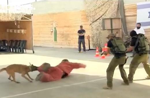 فیلم | شلیک نمادین گردشگران اسرائیل به هدفهای فلسطینی!