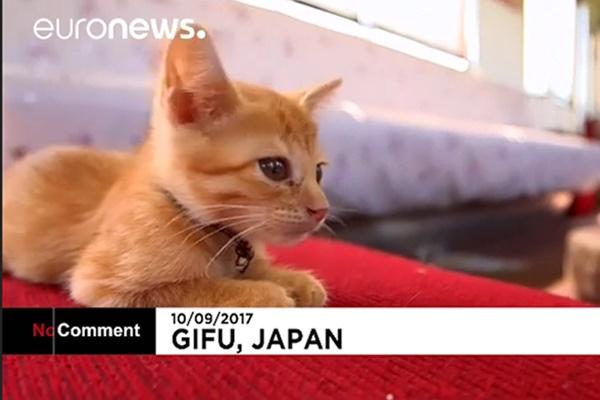 فیلم   راهاندازی کافه گربه در قطار ژاپنی!